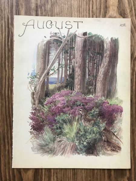 August - Country Diary of an Edwardian Lady - Book Page -